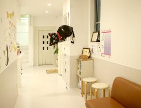 ねこちゃん専用待合室