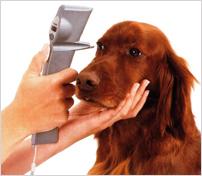 動物用眼圧計